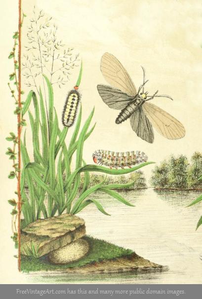 Bird Food Cycle Life Moth