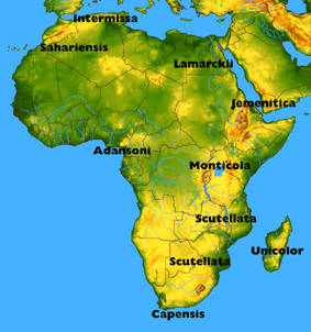 map of africanized bees in us valid best detailed