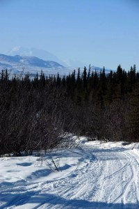 into the wild - stampede trail