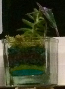 The strange Air Plant I received from a job applicant.