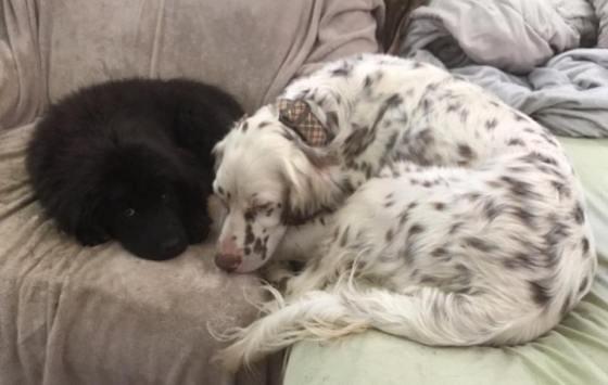 Winston and Daisy