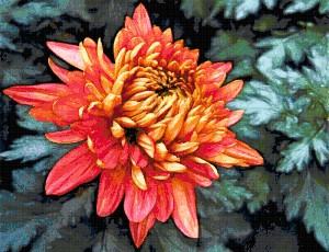 free cross stitch pattern chrysanthemum flower