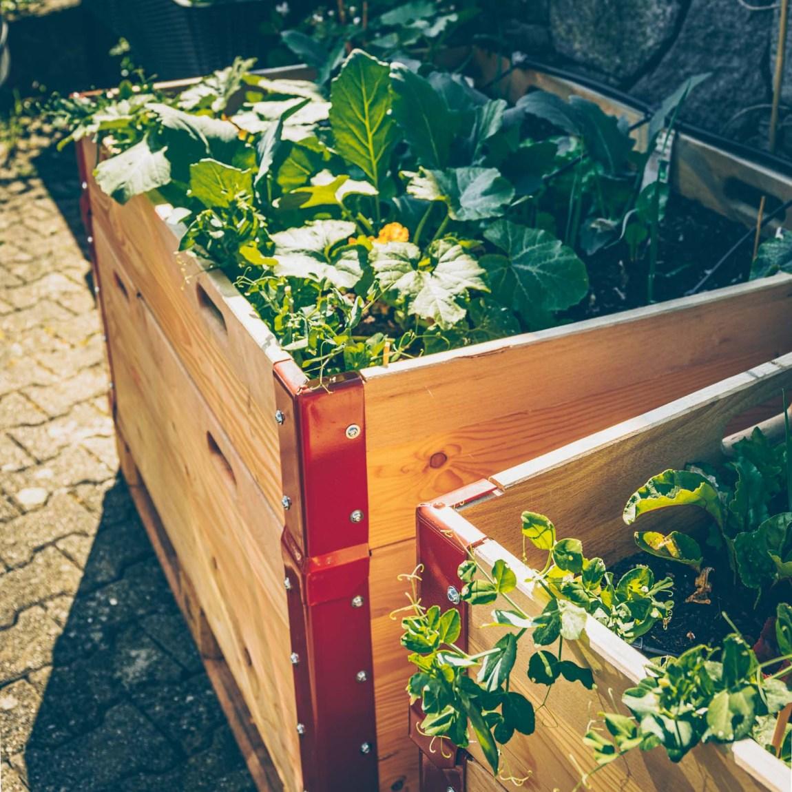 2 Zucchini-Rezepte und ein Update aus dem Garten