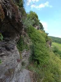Collis-Steilpfad mit Klettersteig über Zell an der Mosel
