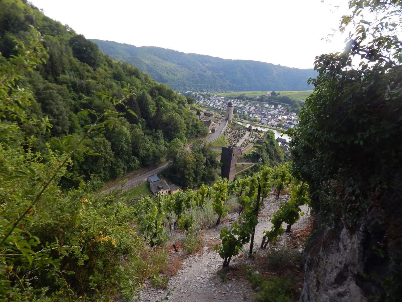 Klettersteig Mosel : Collis steilpfad klettersteig zell an der mosel freiweg