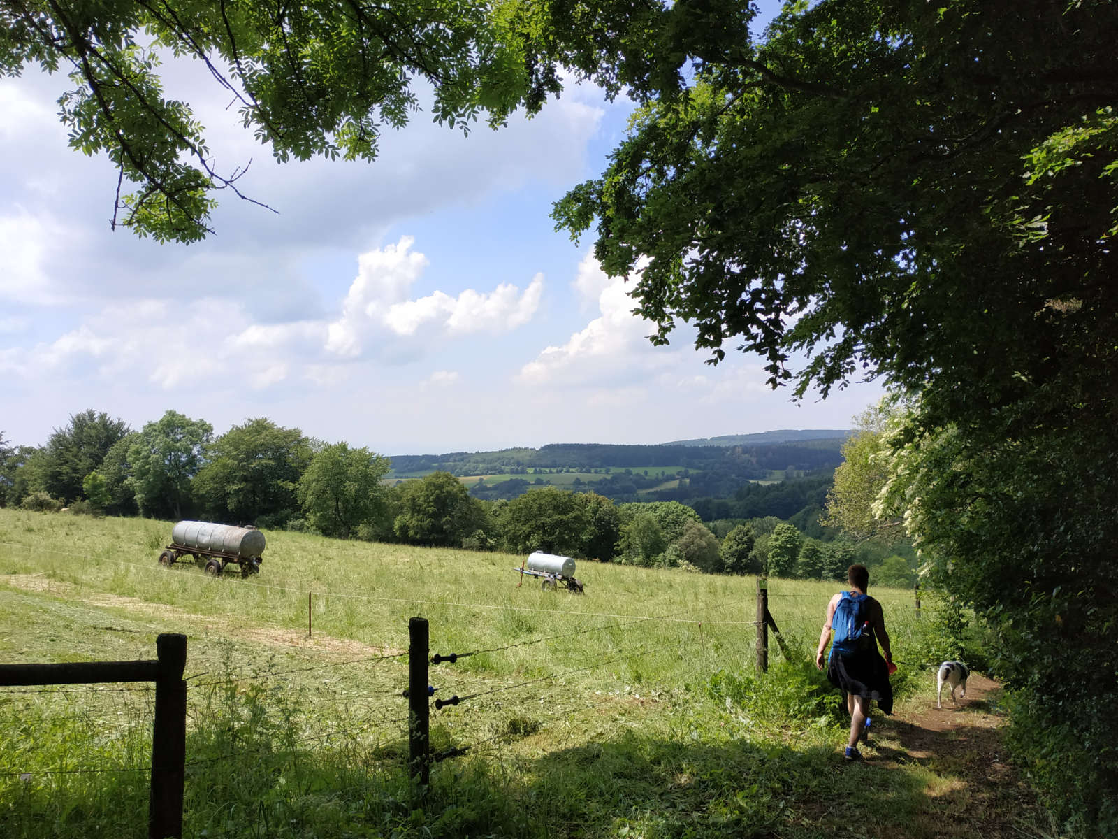 Wandern auf dem Bergmähwiesenpfad im Vogelsberg