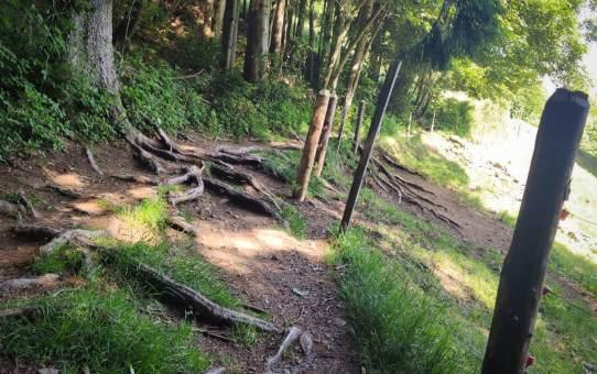 Mountainbike Trailtour Rosskopf Kandelhöhenweg Dreisam bei Freiburg