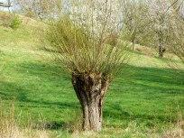 Natur in Freital