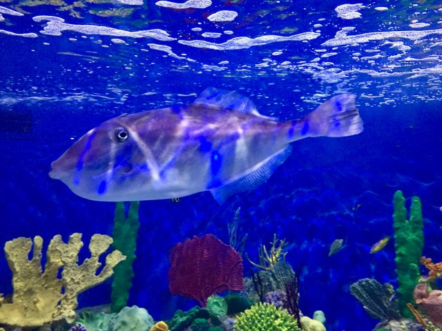 fpm_aquario_peixe3