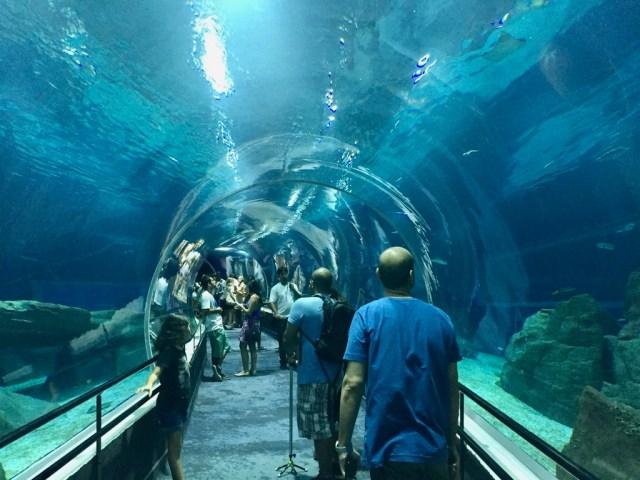 fpm_aquario_tunel2