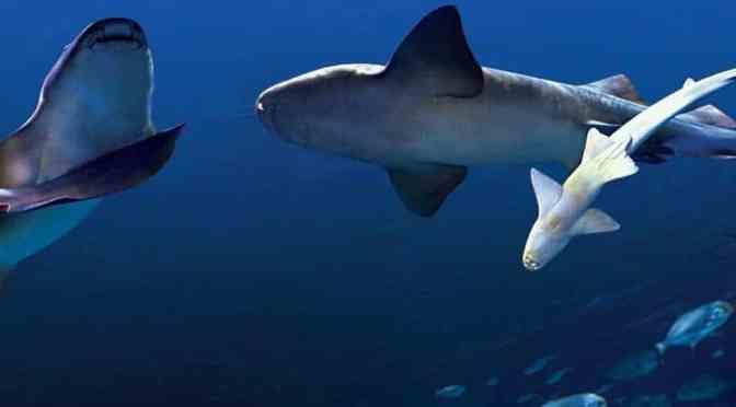 Gardaland 2018: Neues Themengebiet und 10 Jahre Garadaland Sea Life