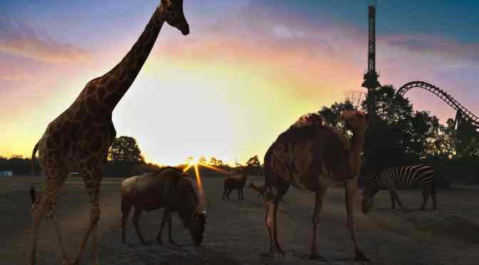 Safariland Stukenbrock feiert 50-jähriges Bestehen mit Jubiläumswoche vom 15. bis 20. Juli