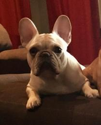 Otis1 2 years old