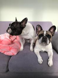 lucy-and-coco4