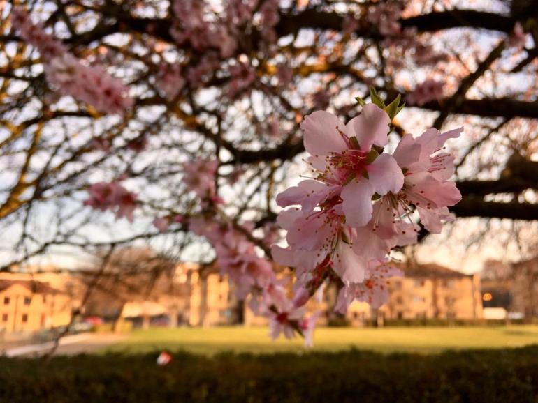 printemps écosse