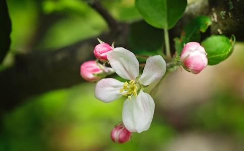 Laisser pousser nos racines... pour mieux fleurir.