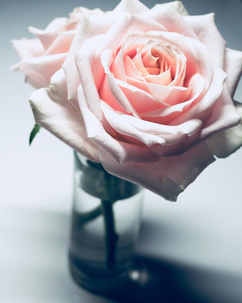 La Vie En Rose Lyrics English Translation Edith Piaf