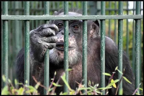 Jojo le singe de la Pépinière