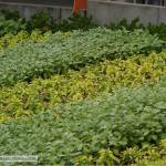 Agrifuture of Tomorrowland