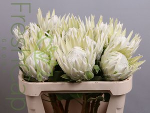 African Flower Export Products