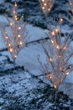 Dainty sparkly lights
