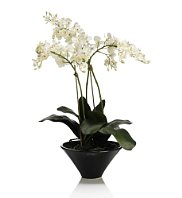Deal of the day: Artificial orchid plant display