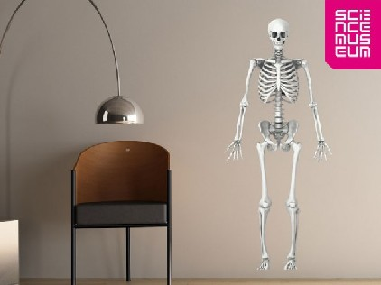 Skeleton wall stickers for Halloween