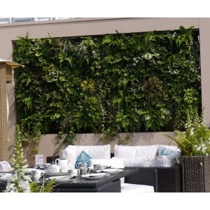 Create a vertical living green wall