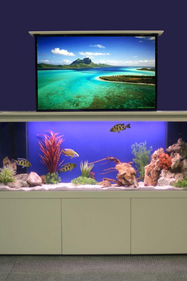 Fresh design concept: TV concealing aquarium