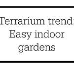 Embrace the terrarium trend: Indoor gardening made easy