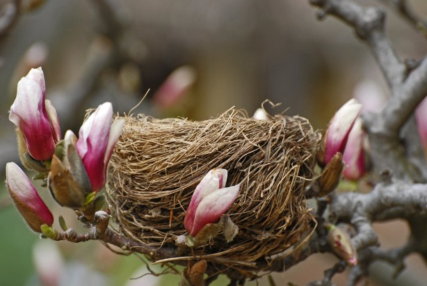 Spring is sprung and birds are nesting. Find out what bird box to have for different types of garden birds