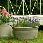 Small and beautiful – a fresh approach to container gardening