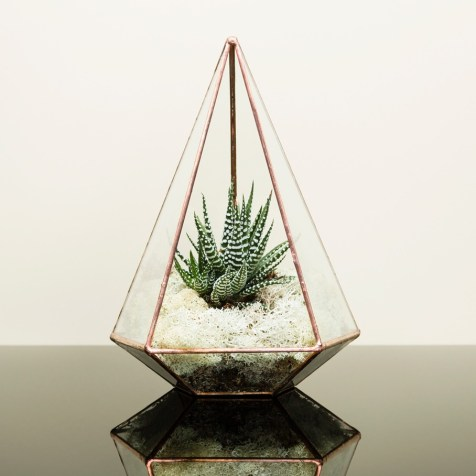 Small succulent plants work well displayed in a stylish copper terrarium