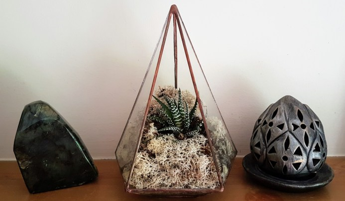 Have you tried a terrarium? For small indoor plants like succulents they make a lovely home display feature
