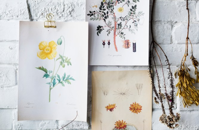 Decorate a room with botanical prints or draw your own