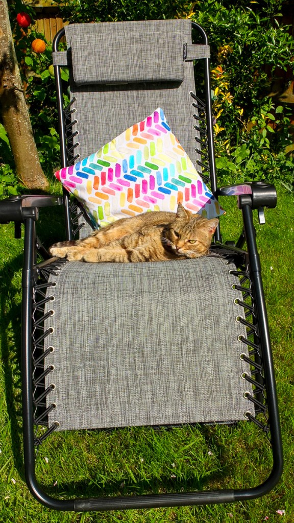 Both humans and cats find the VonHaus zero gravity garden chair super comfortable to relax on!