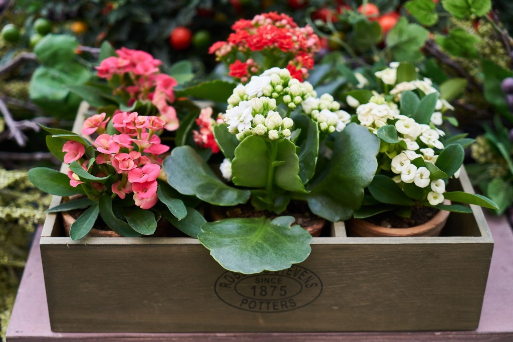 Tidy your garden and plant pots of flowers - it could positively boost the outside appeal of your home to property buyer