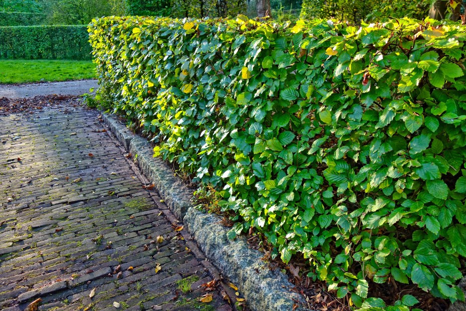 Revamp your exterior space - consider planting a hedge on the side of a driveway