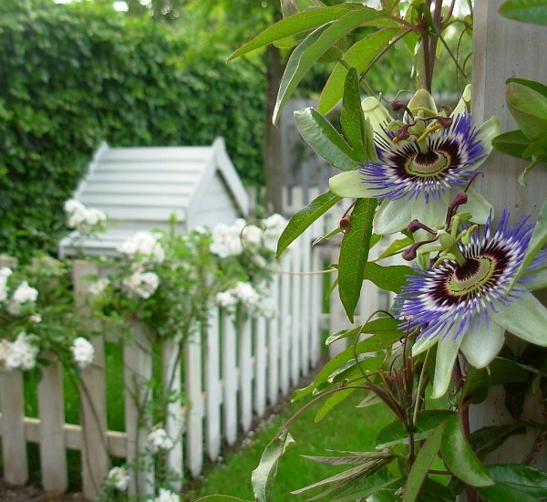 Zone In and Chill Out: How to Use Zoning in Your Garden