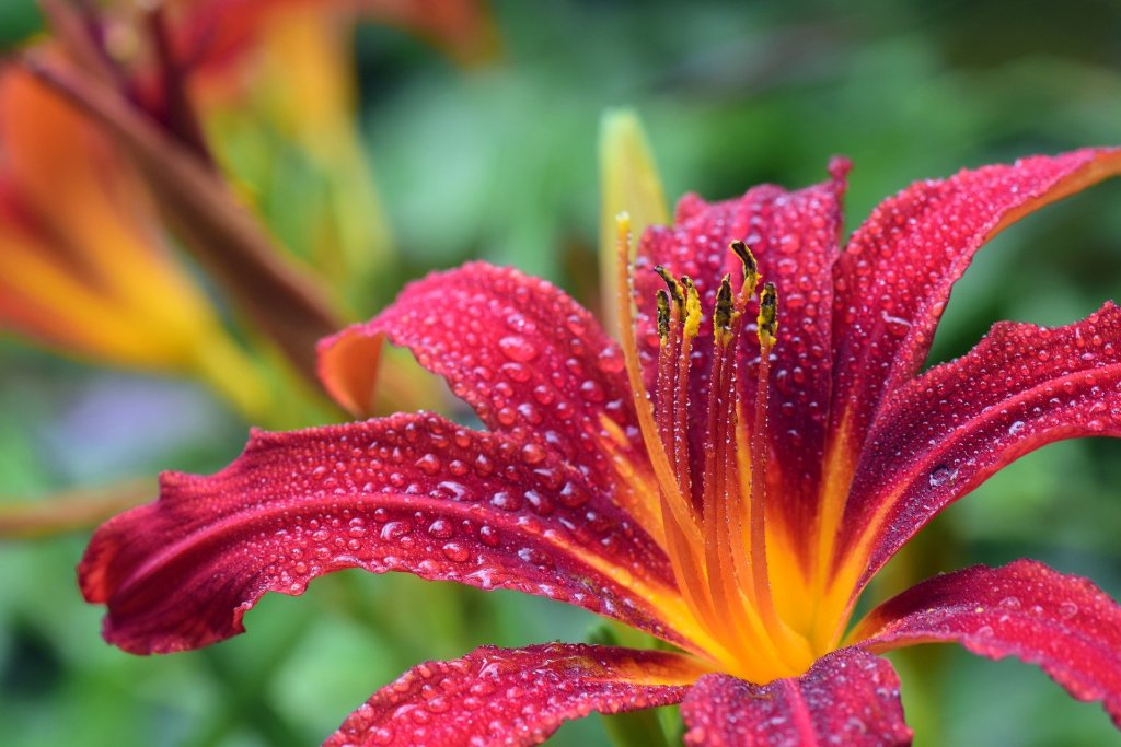 Discover stunning plants like this lily by attending home and garden events