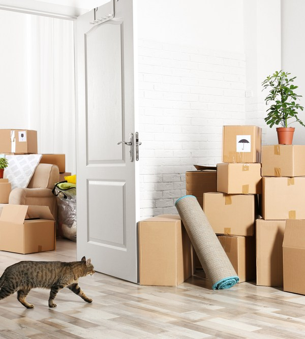 How to Pack Up Your Home for a Move without Damaging Your Décor Pieces