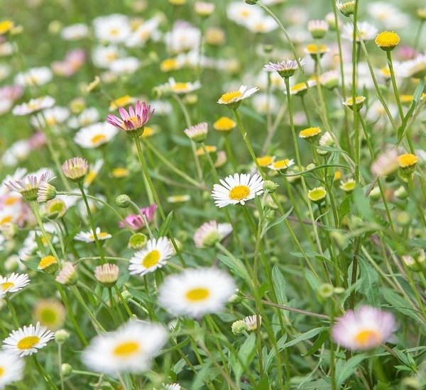 How To Use Ground Cover Plants In Your Garden