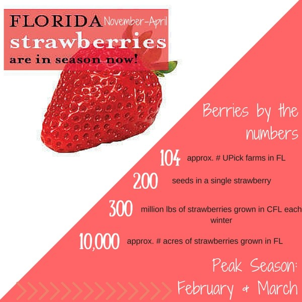 Florida Strawberry Season