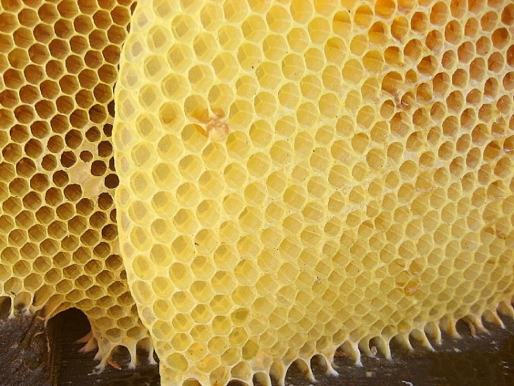 What is beeswax? Here's your ultimate guide