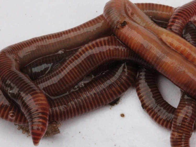 What is a wormery and why should I have one?