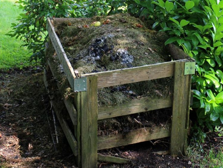 garden compost helped by borage