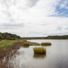 Weekend Guide to Pawley's Island