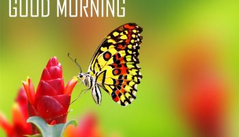 40+ Beautiful Good Morning Images with Flowers