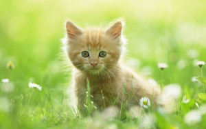 just a cute kitten playing in the field