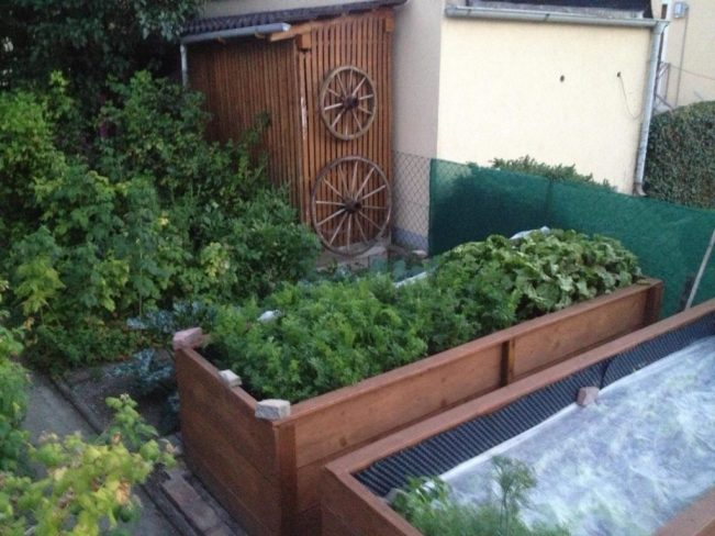 Raised beds is an excellent way to grow summer crops! You have more control over soil and irrigation this way.